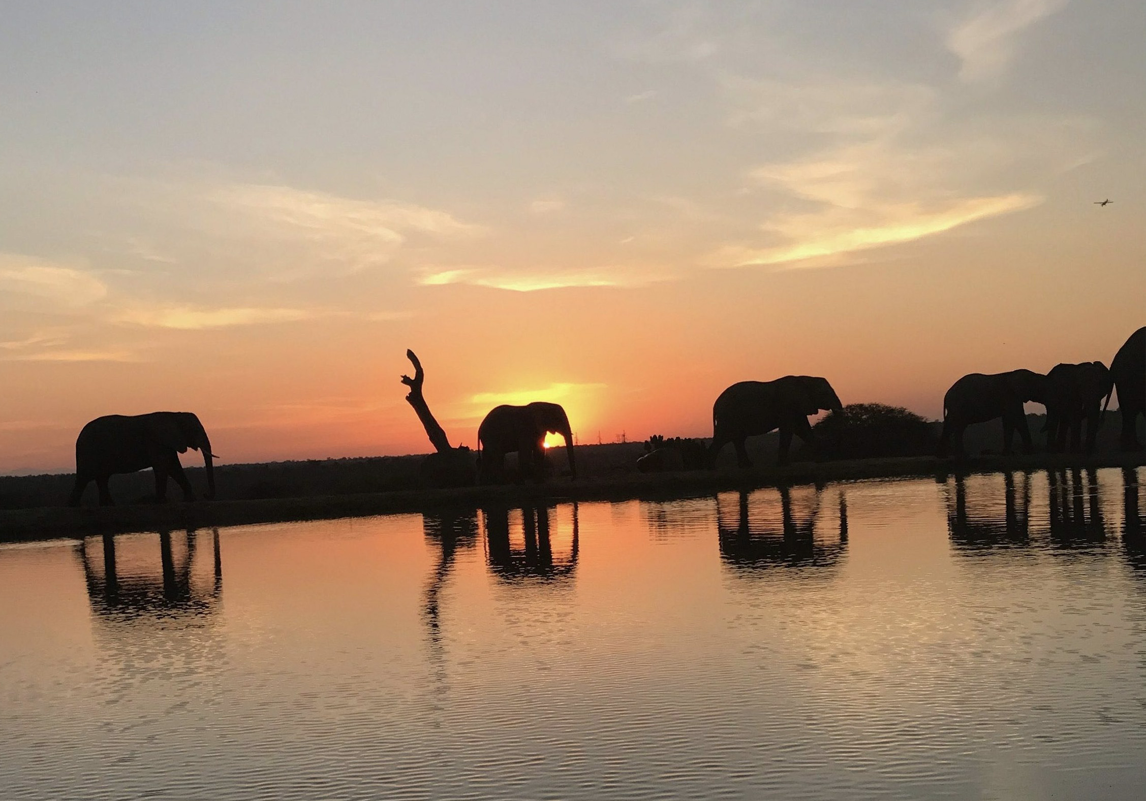 Ultimate Retreat, An African Experience with elephants